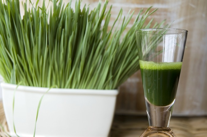 What Exactly is Wheatgrass?