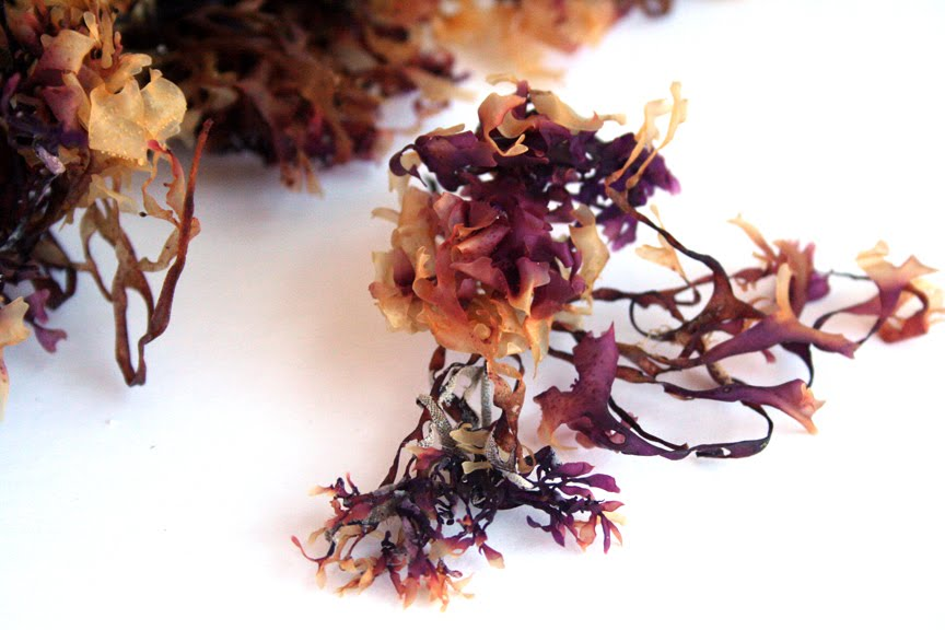 Superfood Trends: Irish Moss